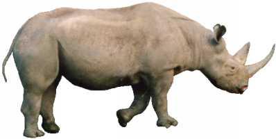 Mozilla Rhino